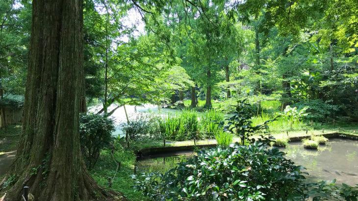 【お手水の森(柿原養鱒場)】自然豊かで夏も涼しい!マス釣と料理を満喫